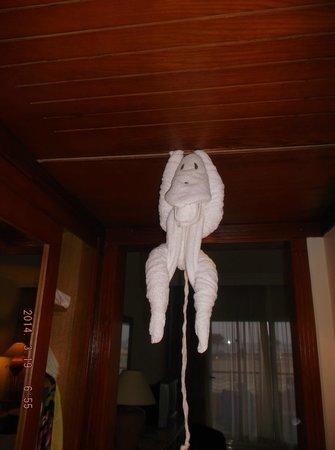 El Malikia Resort Abu Dabbab: monkey is waiting banana from me :)
