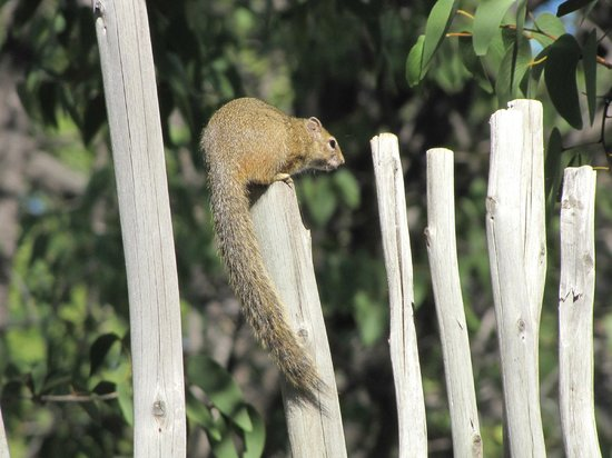 Halali Resort: Ecureuil dans le jardin