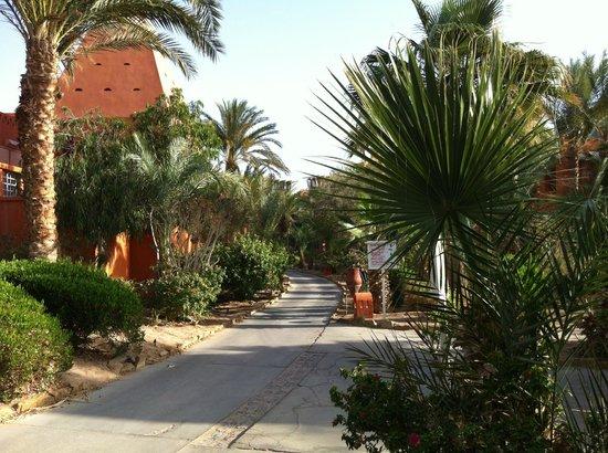 Sheraton Miramar Resort El Gouna: дорожка к номеру