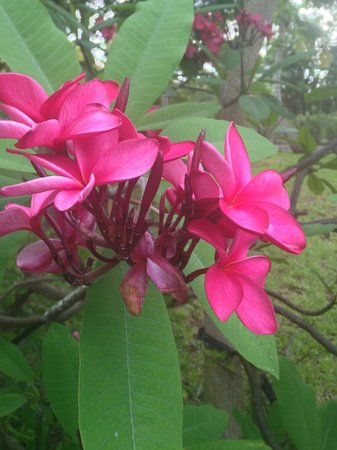 Royal West Indies Resort: Flowers are gorgeous!