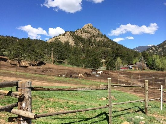Elkhorn Lodge and Guest Ranch: horses & property at Elk Horn Lodge