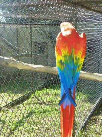 Le Jardin Aux Oiseaux : COCO