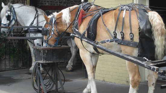 Old South Carriage Company: Thanks Jedediah