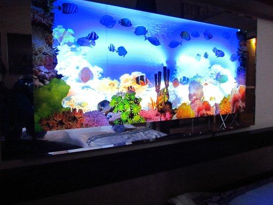 acquario con pesci in movimento