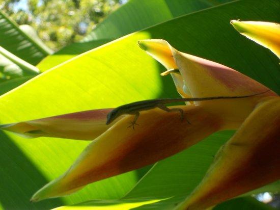 Beaches Negril Resort & Spa: Little lizard on plant