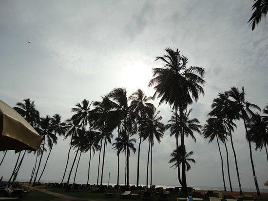 Club Hotel Dolphin : Sun set in Negombo
