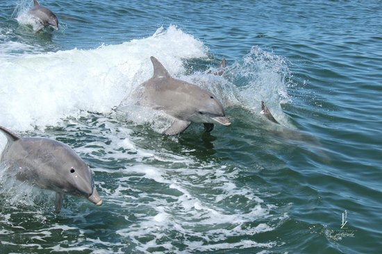 Thundercat Dolphin Watch: Dolphins LOVE jumping in Thundercats waves!
