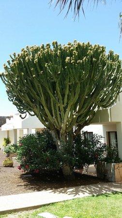 Suite Hotel Atlantis Fuerteventura Resort: Jardins