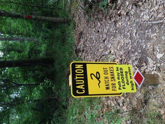 Tickfaw State Park: Trail