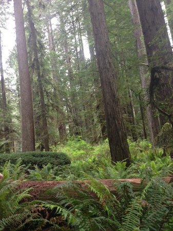 Redwood National Park: View from Cal Barrel Trail