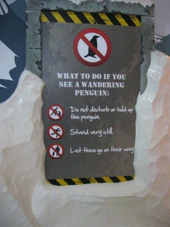 SEA LIFE London Aquarium: Экологическое воспитание с юмором
