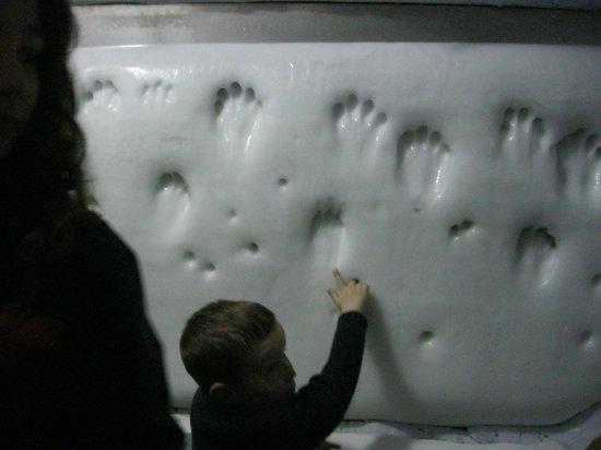 """SEA LIFE London Aquarium: Отпечатки лапок пингвинов в """"снегу"""""""