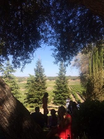 The Oaks Hotel: wine Country