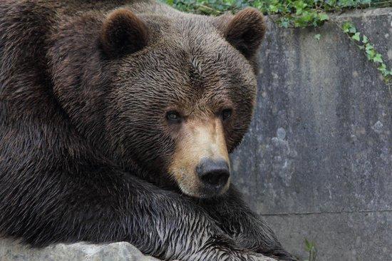 Wildnispark Zurich Langenberg: Bear