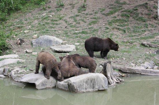 Wildnispark Zurich Langenberg: Bears
