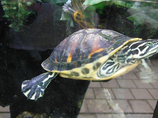 SEA LIFE Blankenberge: Schildkröte