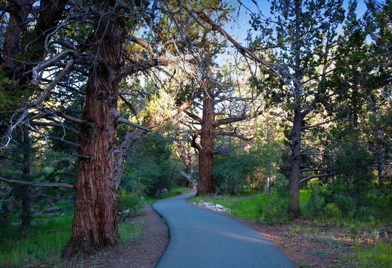 Big Bear Region, CA: Big Bear's Alpine Pedal Path for biking and forest walks.