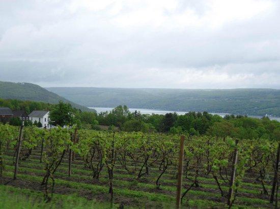 Dr. Konstantin Frank's Vinifera Wine Cellars: View