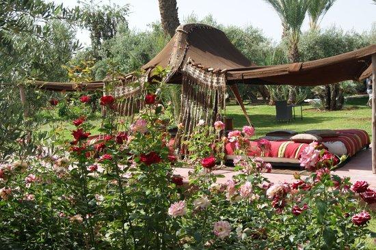 Dar Zarraba : le jardin