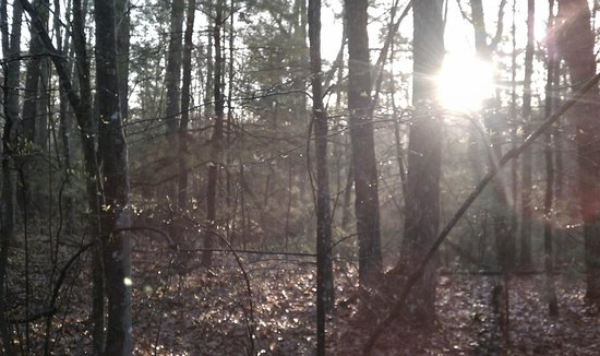 Big South Fork National River & Recreation Area: Morning, Sun!