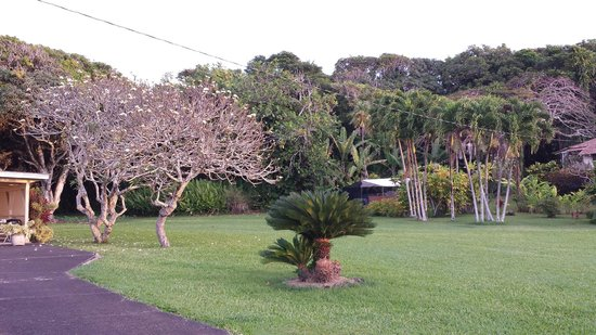 Hana Accommodations: The Plumeria tree on their property