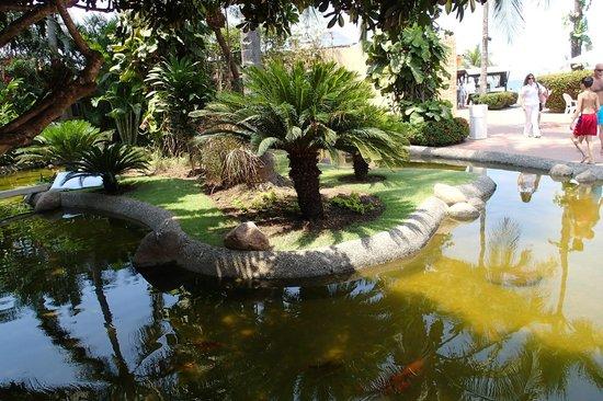 Velas Vallarta : Coy Pond