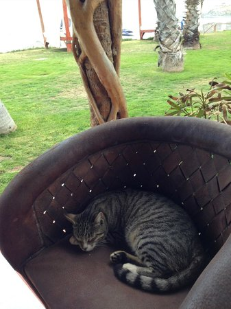Cerritos Surf Town : Resident cat had carte blanche lounging privileges