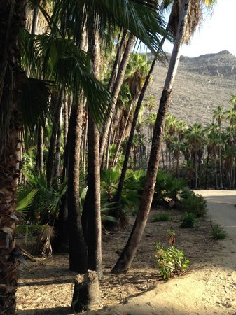 Cerritos Surf Town : Path to Playa las Palmas, a nearby but remote swimming beach