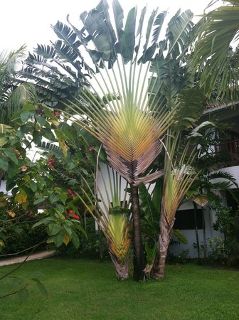 Couples Swept Away: Our favorite Palm Tree
