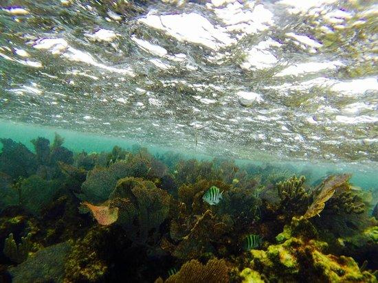 The Original Snorkeling Adventure: Beauty