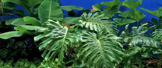 Hotel Medio Mundo : lush tropical plants