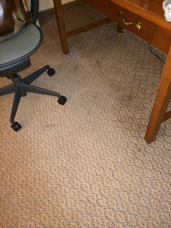 Hilton Garden Inn Auburn Riverwatch: The entire floor had large stains covering most of it