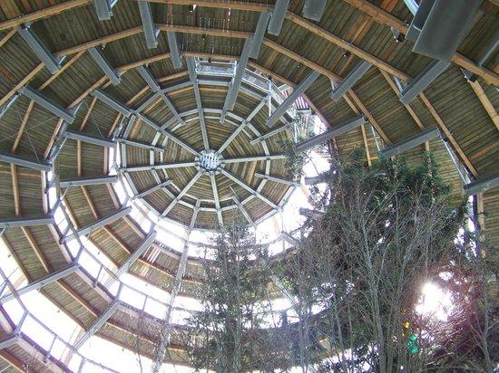Baumwipfelpfad Bayerischer Wald: Ansicht von unten