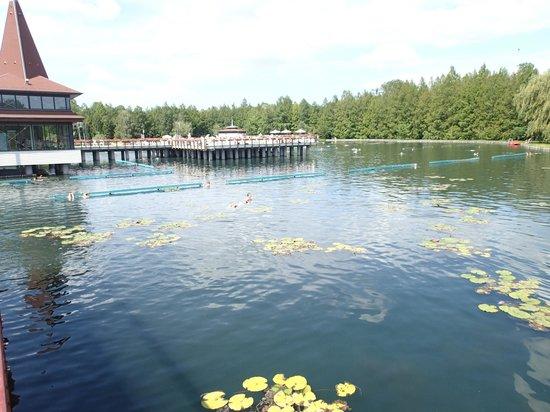 Thermal Lake of Hévíz: Thermalsee