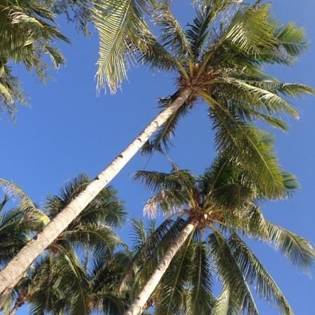 La Carmela de Boracay: my view while sunbathing at La Carmela Beach Front