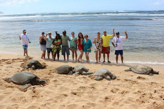 Hawaii Turtle Tours Secret Beach
