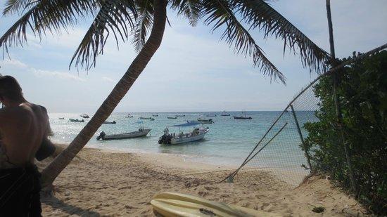 Playa Diving Center: Beach, Playa del Carmen