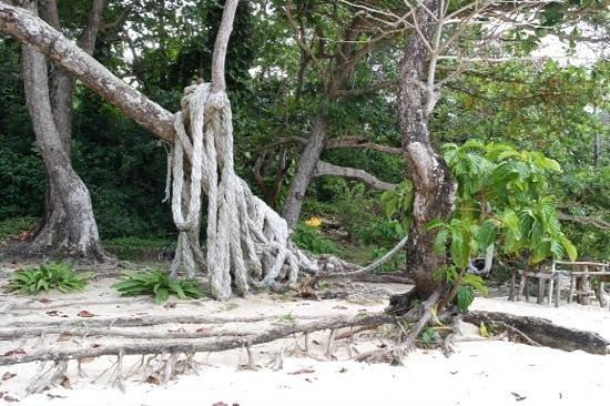 Winifred Beach: Jungle Gym?