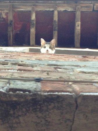 L'Affittacamere del Corso: micio curioso del piano superiore