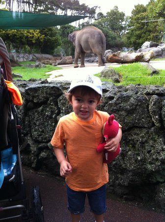 Auckland Zoo : Adventures at the Zoo 3