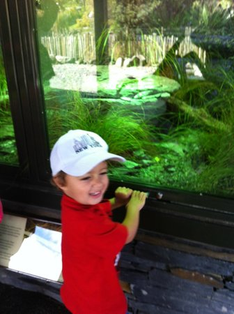 Auckland Zoo : Adventures at the Zoo 2