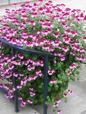 Serres Royales De Laeken : Bloemen pracht .