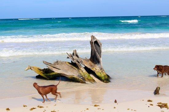 Suenos Tulum : driftwood