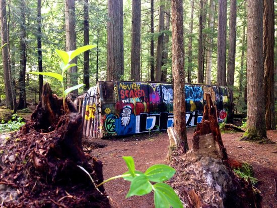 The Whistler Train Wreck Trail: The colours come alive amongst the trees