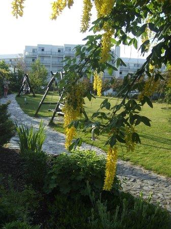 Pogorzelica, Πολωνία: ogród