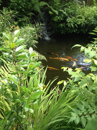 Grady House Bed and Breakfast: Koi Pond