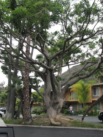 Best Western Seven Seas: Tree in front of hotel room