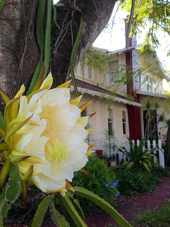 The Hibiscus House Bed & Breakfast: blooming cactus