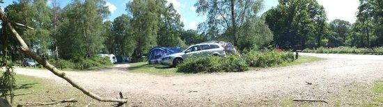 Hollands Wood Campsite: the campsite