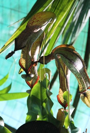 Cairns Botanic Gardens : flowers
